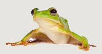 FrogB