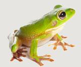 FrogC