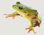 FrogD