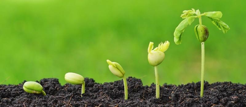Growing_Salespeople-1.jpg