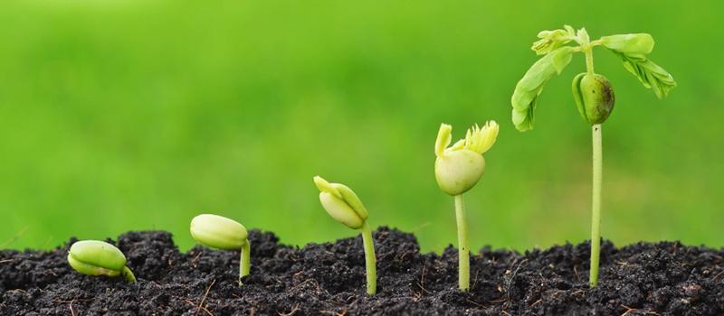 Growing_Salespeople